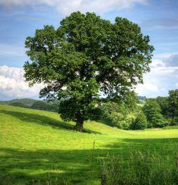 strom_v_raji